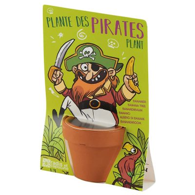Plante Bananier pirate